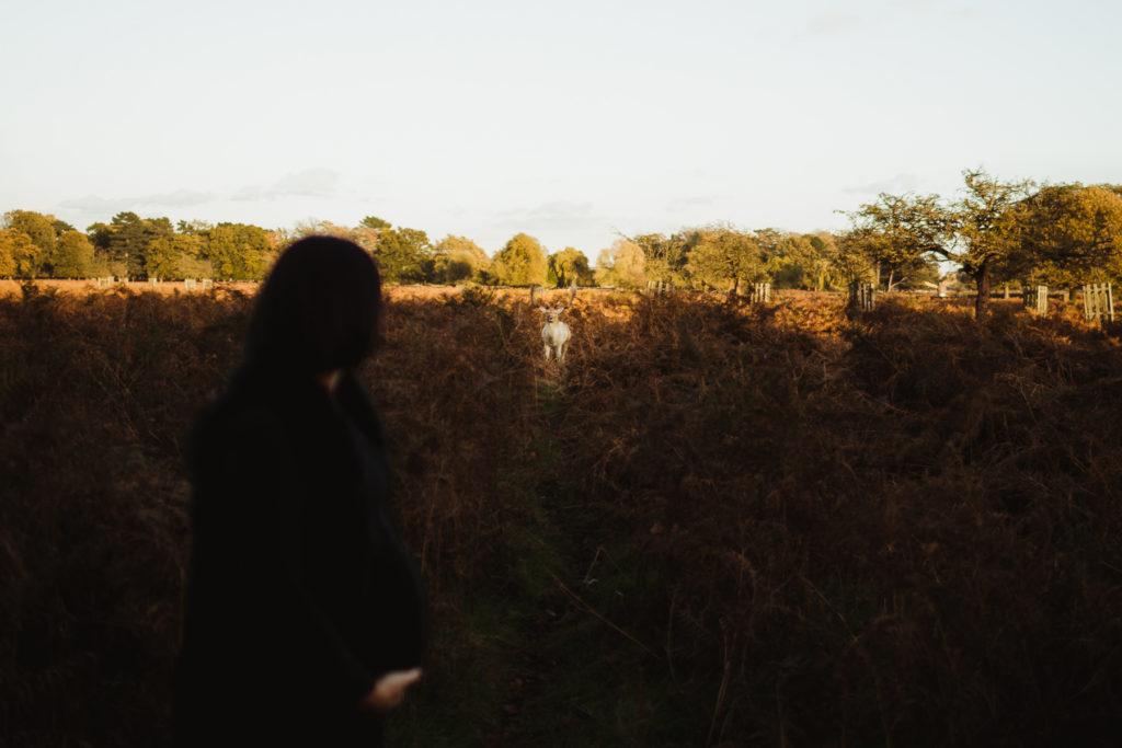 stag in bushey park